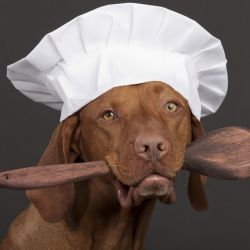 dog with chef hat promoting healthy diet