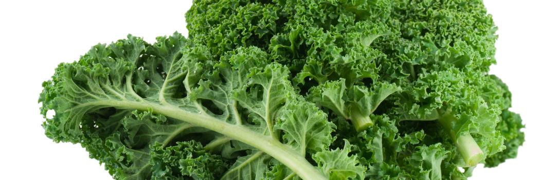 Kale close up on white background