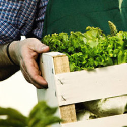 A closeup of a farmer carrying a box filled with greens